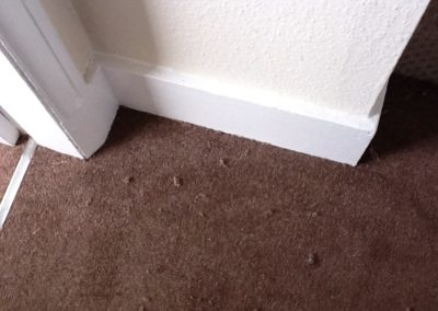 carpets fitter stoke